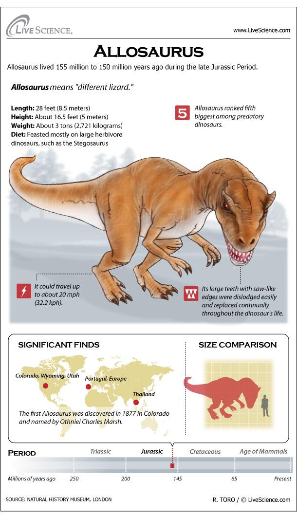 Allosaurus121119