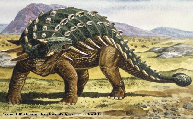 This dinosaur was armed with thick skin, bony plates and a club like tail which was used to swipe predators. It was a herbivore which lived during the Late Cretaceous. Fossils have been found in Alberta, Canada.