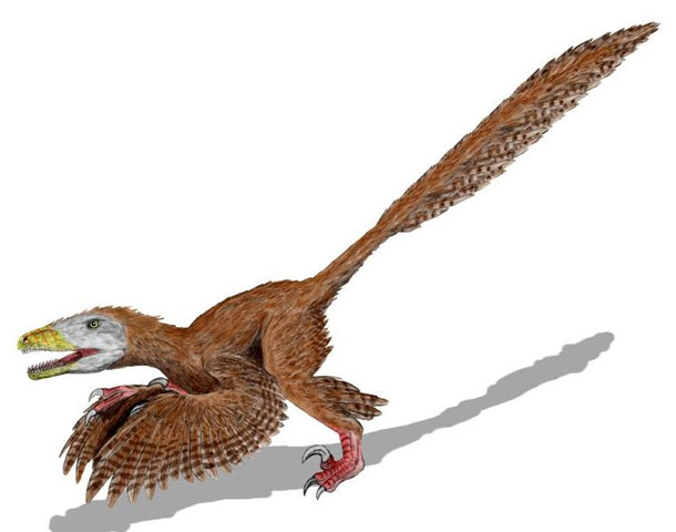 Deinonychus_restoration