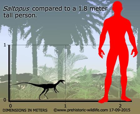 saltopus-size